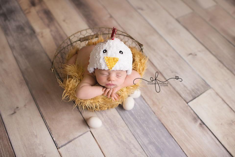 Chicken Newborn Session | Farm Newborn Session | Newborn Chicken | CT Newborn Photographer Elizabeth Frederick Photography www.elizabethfrederickphotography.com